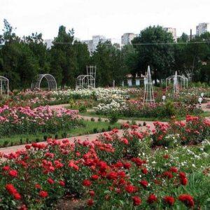 Ботанический сад им. Н.В. Багрова